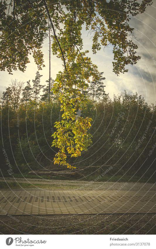 Bunter Herbst Natur Pflanze Himmel Schönes Wetter Baum Wald Wege & Pfade entdecken Erholung Freiheit Freizeit & Hobby Idylle Lebensfreude Farbfoto mehrfarbig