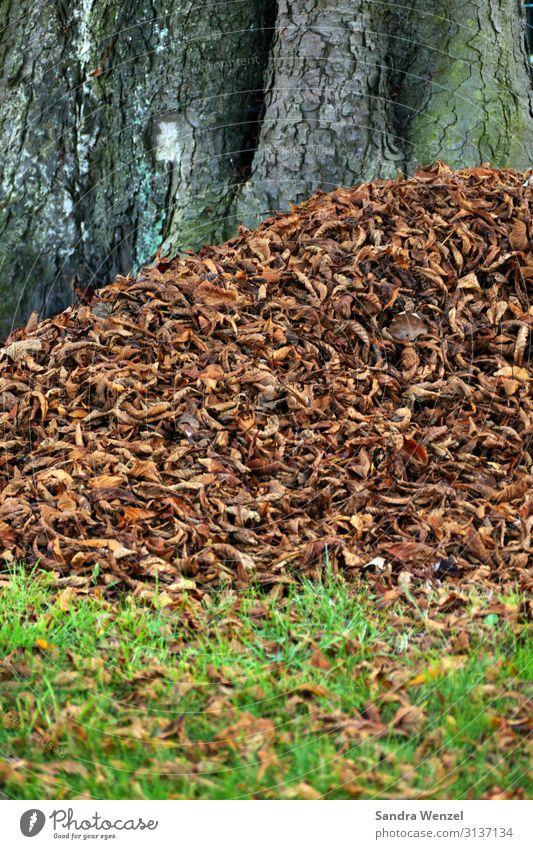 Herbst Natur Pflanze Baum Blatt Wald Wiese Garten Park Feld Wetter Klima Herbstlaub Klimawandel verblüht Laubwald