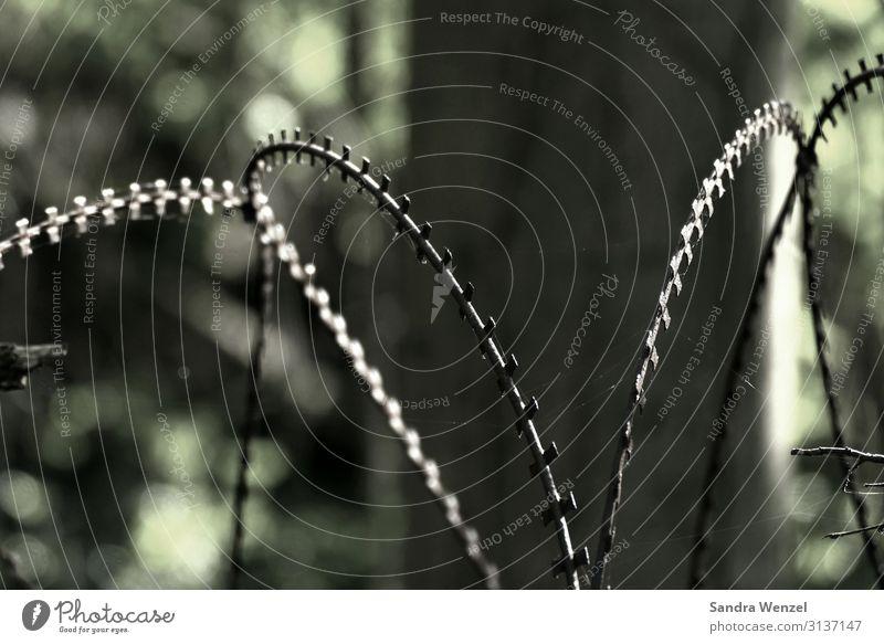 Natodraht Mensch Landschaft Schutz Sicherheit Zaun Grenze Barriere Aggression Justizvollzugsanstalt Migration Stacheldraht unmenschlich