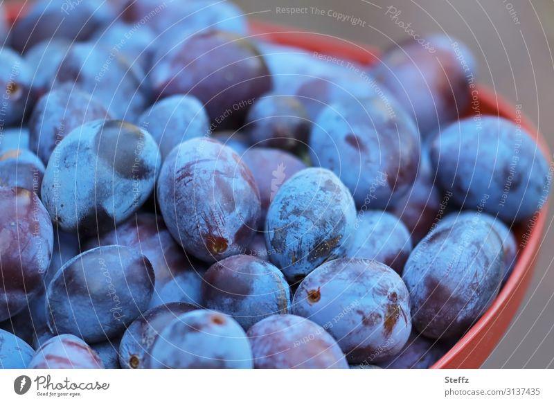 Pflaumenernte Lebensmittel Frucht Dessert Bioprodukte Vegetarische Ernährung Vegane Ernährung Gesunde Ernährung Umwelt Natur Sommer Nutzpflanze Garten