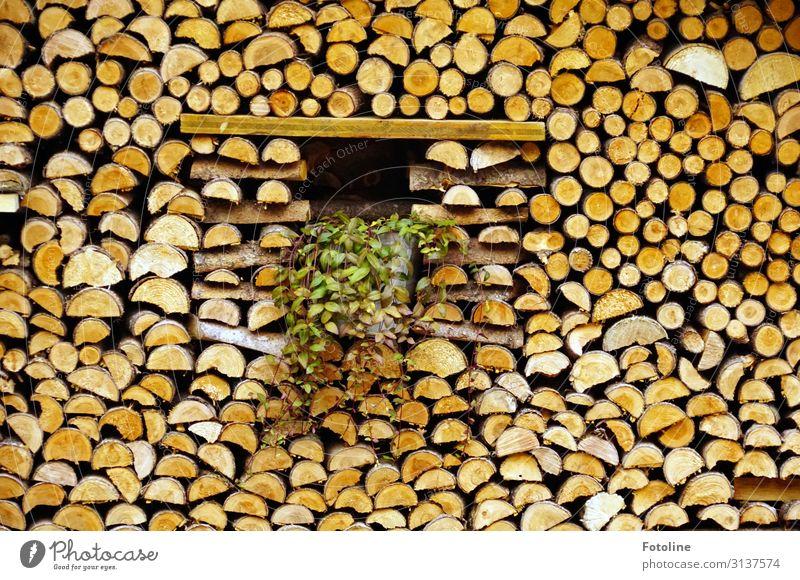 Ordentlich Holz vor der Hütte natürlich braun Brennholz Holzstapel Stapel Farbfoto mehrfarbig Außenaufnahme Detailaufnahme Menschenleer Tag Licht Sonnenlicht