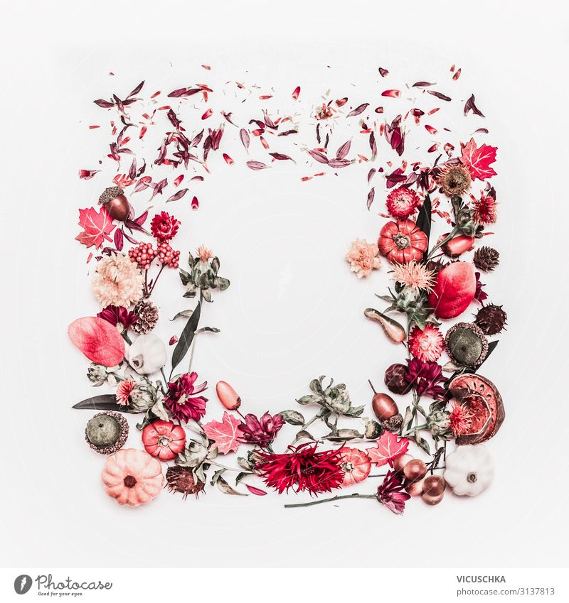 Herbst Natur Arrangement Rahmen Stil Design Pflanze Blume Dekoration & Verzierung Blumenstrauß Ornament arrangiert Hintergrundbild Quadrat Entwurf Stillleben