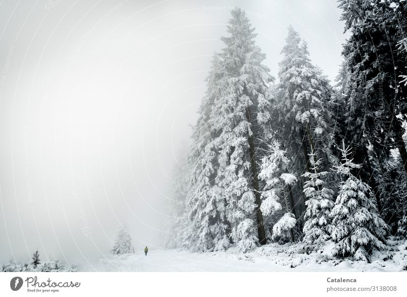 Verloren | im Nebel Winter Winterurlaub wandern androgyn 1 Mensch Natur Landschaft Pflanze Himmel Wetter Schnee Baum Tanne Wald Flüssigkeit kalt grau schwarz