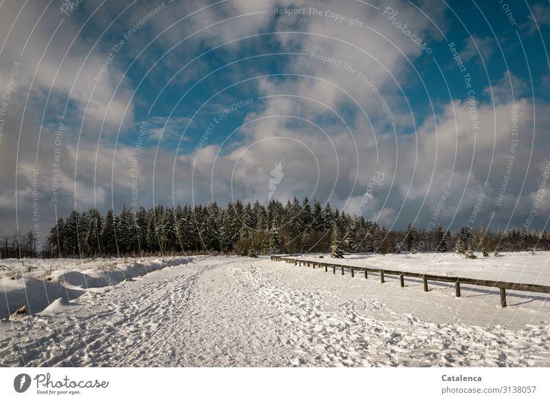 So war es Ausflug Winter Schnee Winterurlaub wandern Landschaft Himmel Wolken Horizont Eis Frost Schneefall Baum Fichtenwald Hohes Venn kalt blau braun grau