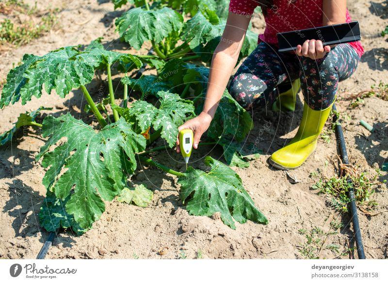 Landwirte messen den Boden in der Zucchini-Plantage. Garten Labor Prüfung & Examen Bildschirm Werkzeug Technik & Technologie Frau Erwachsene Umwelt Pflanze Erde