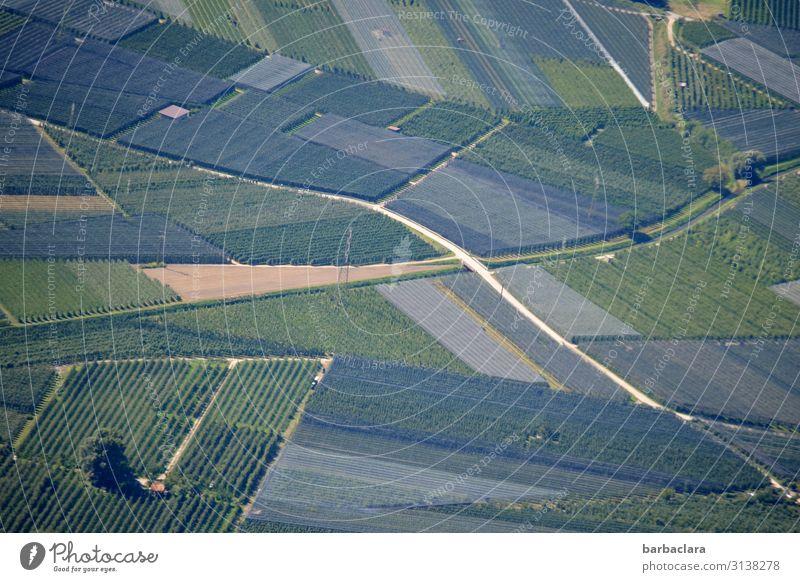 Südtiroler Landschaftsteppich Natur Pflanze grün Baum Herbst Umwelt Wege & Pfade Frucht Arbeit & Erwerbstätigkeit Feld Italien Klima Landwirtschaft viele Ernte