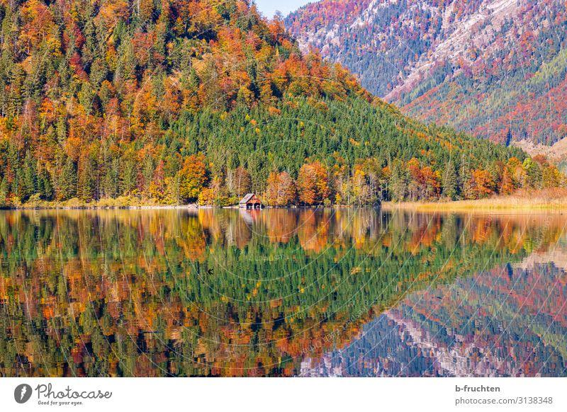 Herbstliche Farbenspiele Ferien & Urlaub & Reisen Tourismus Ausflug Freiheit Berge u. Gebirge wandern Natur Landschaft Schönes Wetter Baum Blatt Wald Alpen See
