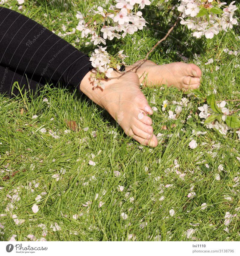 Unterm Kirschbaum feminin Frau Erwachsene Beine Fuß 1 Mensch Natur Pflanze Frühling Schönes Wetter Baum Gras Blüte Garten Park grün schwarz weiß Tierfuß Wiese