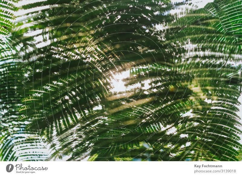 sun is shining through rainforest leaves Ferien & Urlaub & Reisen Natur Sommer Pflanze Sonne Blatt Hintergrundbild Leben Umwelt Frühling wandern elegant