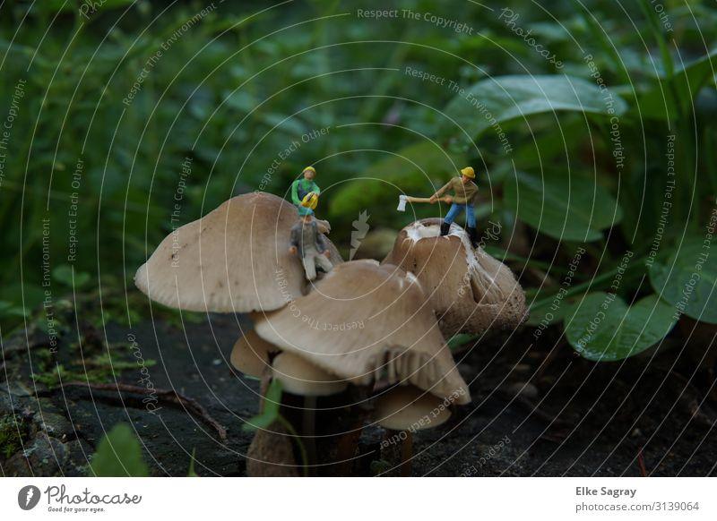 Miniaturwelten Entfernen giftiger Pilze... Mensch Natur Pflanze Tier Arbeit & Erwerbstätigkeit maskulin