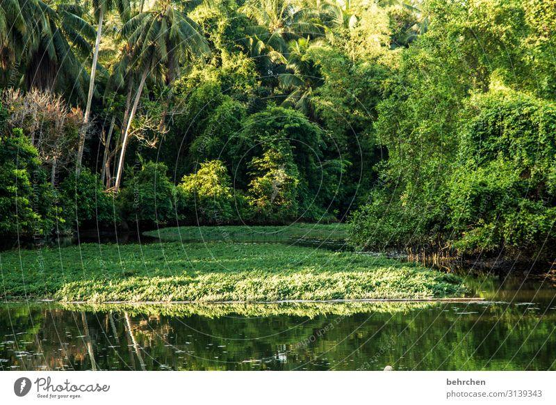 unsere erde Ferien & Urlaub & Reisen Tourismus Ausflug Abenteuer Ferne Freiheit Umwelt Natur Landschaft Pflanze Baum Blatt Wald Urwald Flussufer außergewöhnlich