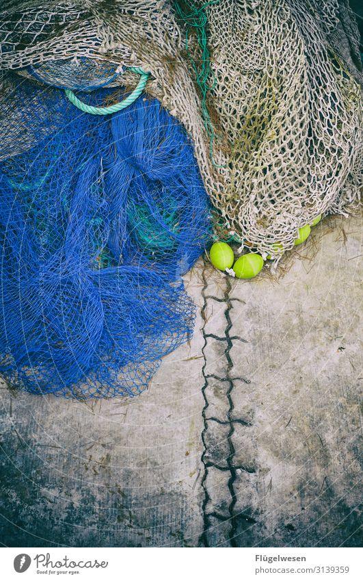 Netz 4 Angeln Fischereiwirtschaft Kescher Gebiss fangen einfangen Einsatz Netzwerk Lebensmittel Meeresfrüchte Ernährung Gesunde Ernährung Speise Mittagessen