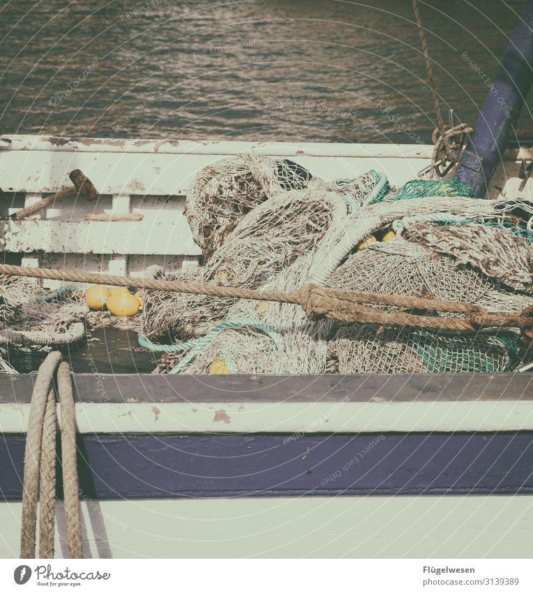 Netz 5 Angeln Fischereiwirtschaft Kescher Gebiss fangen einfangen Einsatz Netzwerk Lebensmittel Meeresfrüchte Ernährung Gesunde Ernährung Speise Mittagessen