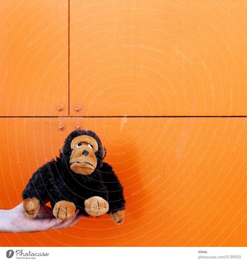 Francois ist noch skeptisch, was da auf ihn zukommt maskulin Mann Erwachsene Hand 1 Mensch Mauer Wand Affen Tier Plattenbau Metall festhalten sitzen orange