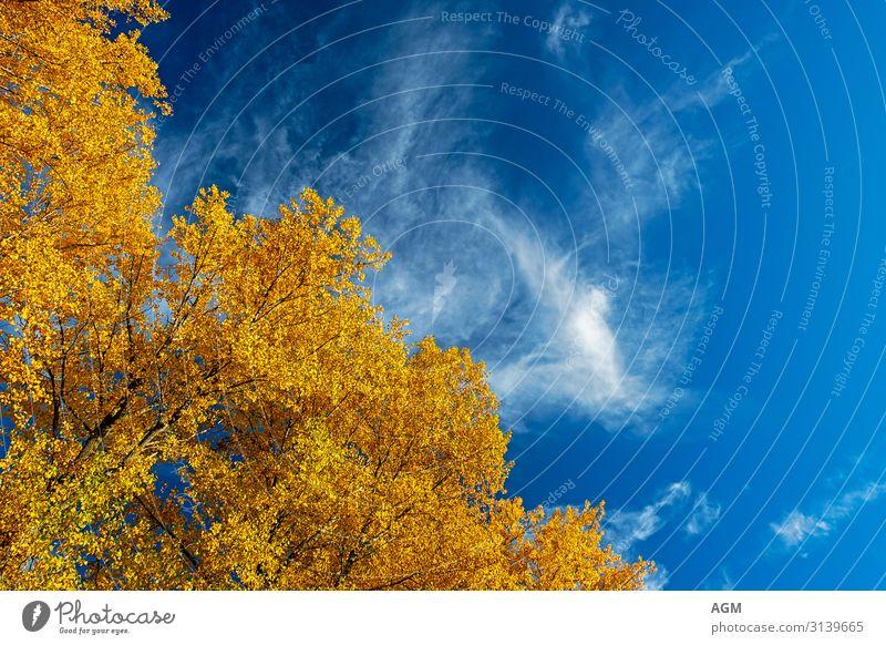 herbstliche Impression Himmel Natur blau schön weiß Baum Blatt Hintergrundbild Herbst gelb Umwelt Glück orange hell Park gold