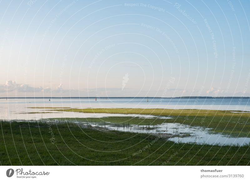 Boddenlandschaft - ruhig und kontemplativ Ferien & Urlaub & Reisen Ferne Freiheit Sommer Meer Natur Landschaft Himmel Horizont Schönes Wetter Gras Moos
