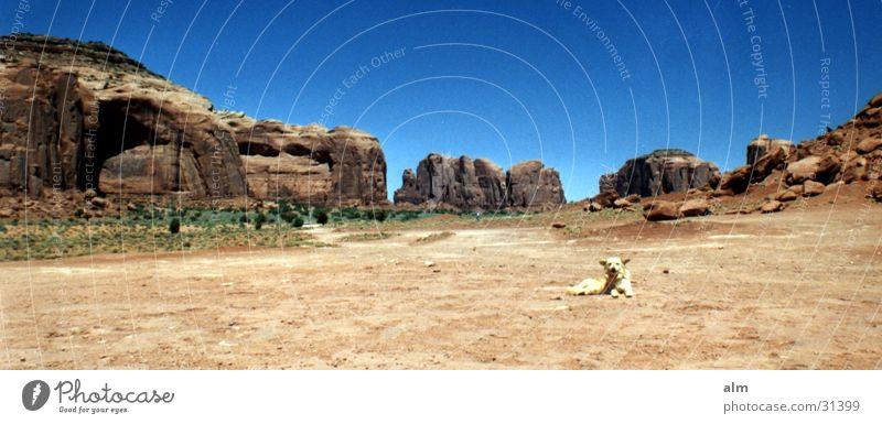 Hund Wüste Blauer Himmel Wolkenloser Himmel Ausflugsziel Monument Valley Gesteinsformationen Klarer Himmel