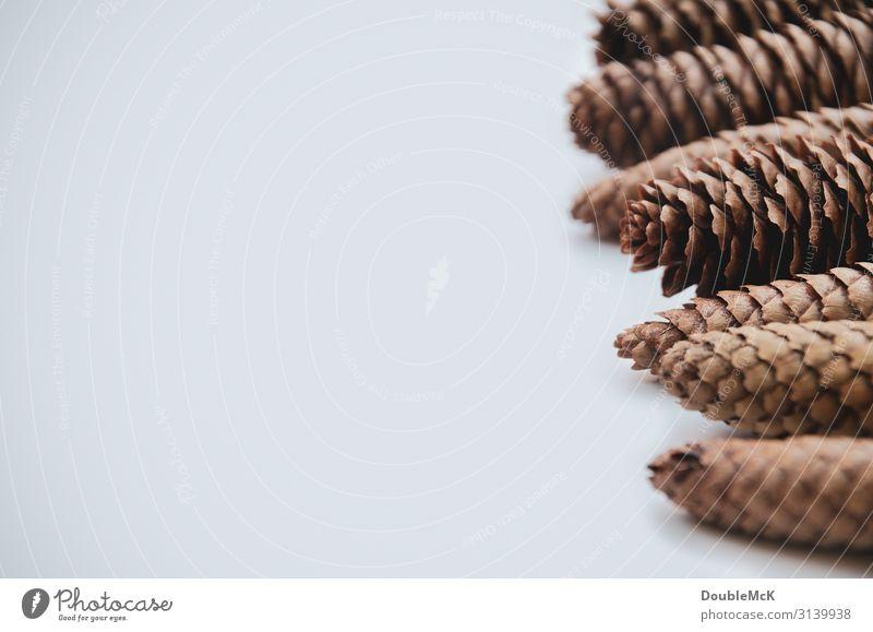 Zapfenspitzen von Tannenzapfen liegen hintereinander gereiht Natur Herbst Winter Wald fallen natürlich braun weiß Zusammensein Bewegung Weihnachten & Advent