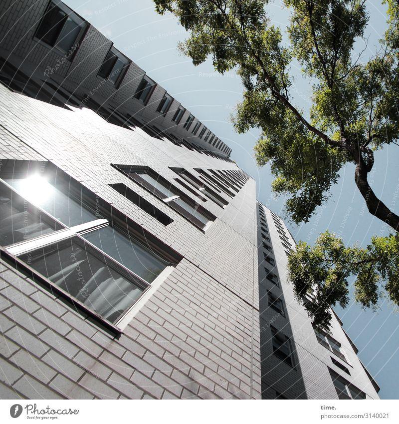 Halswirbelsäulentraining (XXIII) Himmel Schönes Wetter Baum Haus Hochhaus Mauer Wand Fassade Fenster hoch Macht Ausdauer standhaft Ordnungsliebe Neugier