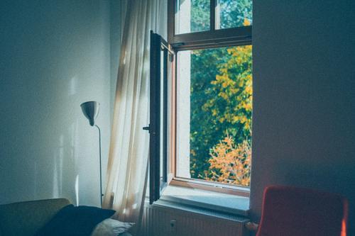 Ausblick ins Grüne aus dem Wohnzimmer in Quarantäne oder Homeoffice Büro Innenbereich Internet Arbeitsplatz online Job neu Heimarbeitsplatz Strategie Woche