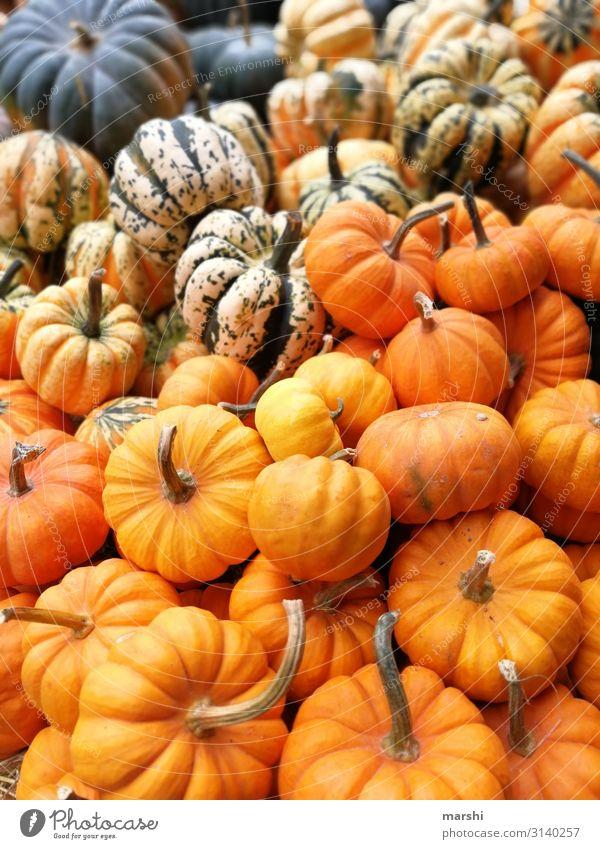 Kürbisse Natur Gesunde Ernährung Herbst orange Stimmung herbstlich Halloween Mischung Kürbiszeit