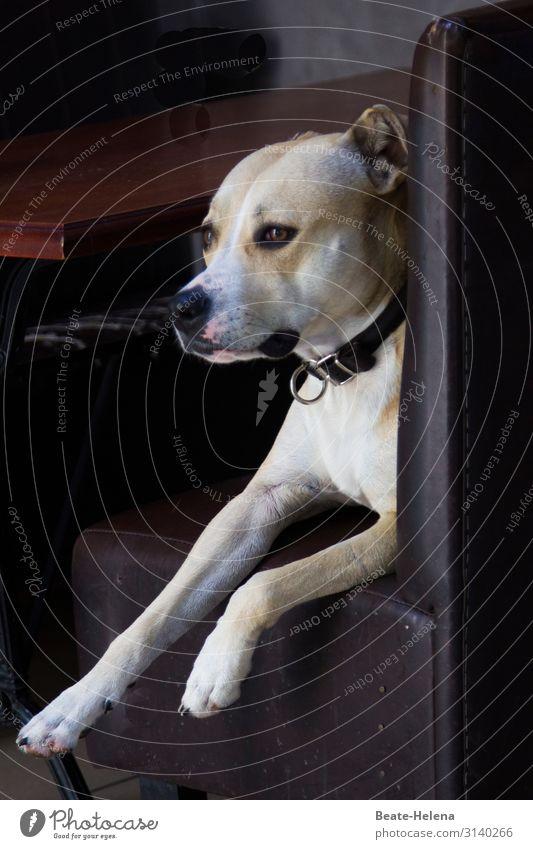 Hundeleben: Eleganter Sitz schön Erholung Tier Lifestyle Stimmung Wohnung Zufriedenheit leuchten elegant sitzen ästhetisch genießen warten beobachten
