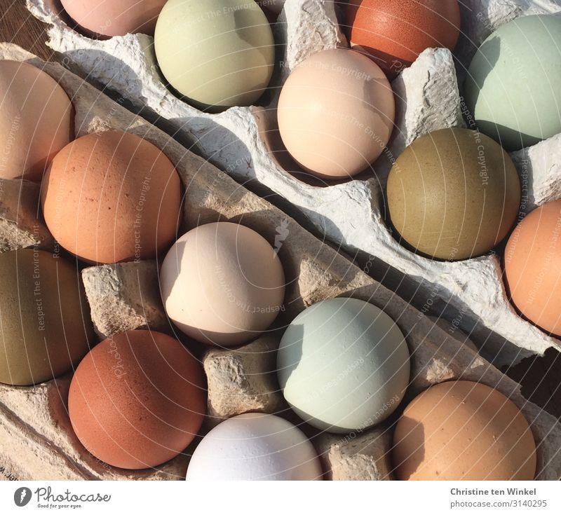 natürlich bunte Hühnereier Lebensmittel Ernährung Bioprodukte Feste & Feiern Ostern Eierkarton außergewöhnlich frisch Gesundheit lecker nah rund schön
