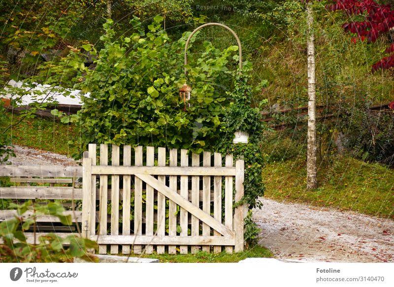 Idylle Umwelt Natur Landschaft Pflanze Urelemente Erde Sand Herbst Gras Sträucher Garten Wiese hell natürlich grün weiß Tor Holz Holzzaun Holztor Eingang