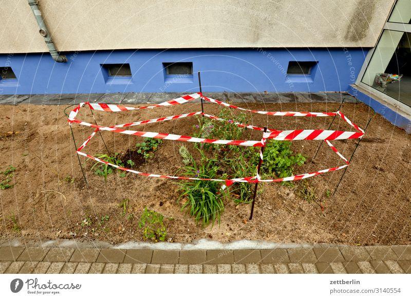 Naturreservat Garten Blume Pflanze Beet Vorgarten anpflanzung Umweltschutz Haus Stadthaus Neubau grün Berlin Vorstadt Zaun eingezäunt umfrieden flaterband