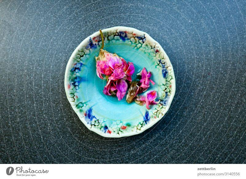 Welke Blume Blüte Blütenblatt welk verblüht Schalen & Schüsseln mehrfarbig Farbe Textfreiraum Menschenleer Pflanze Ornament