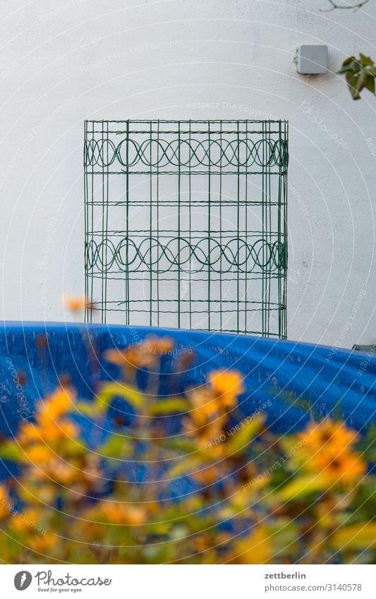 Maschendraht mit Muster Maschendrahtzaun Zaun Drahtzaun Design Kletterpflanzen Ranke Rolle Grenze Garten Nachbar Blume Blüte Blühend Tiefenschärfe Haus Wand