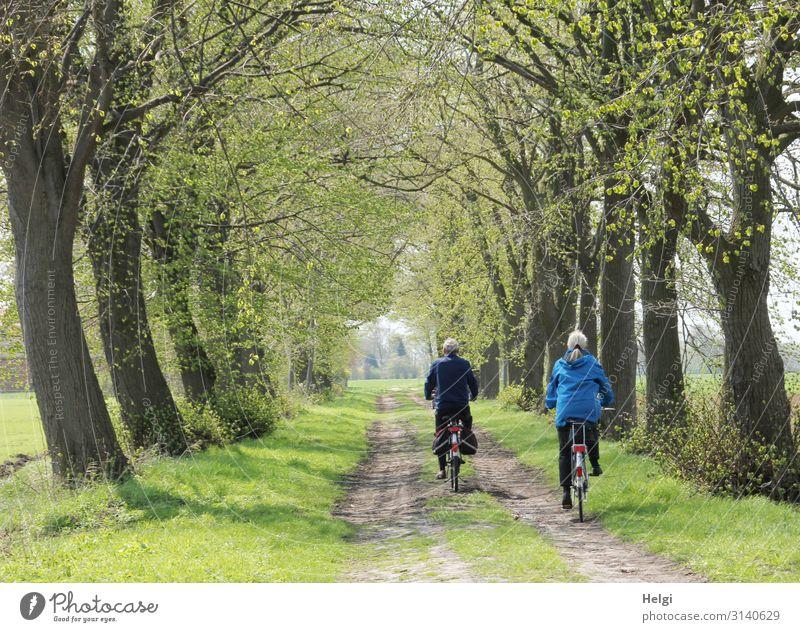 Rückansicht einer männlichen und weiblichen Person auf dem Fahrrad in einer Allee im Frühling Freizeit & Hobby Ausflug Fahrradtour Mensch maskulin feminin