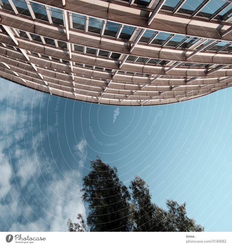 Halswirbelsäulentraining (II) Himmel Wolken Schönes Wetter Baum Hamburg Stadtzentrum Haus Hochhaus Bauwerk Architektur Fassade Fenster hoch Ausdauer standhaft