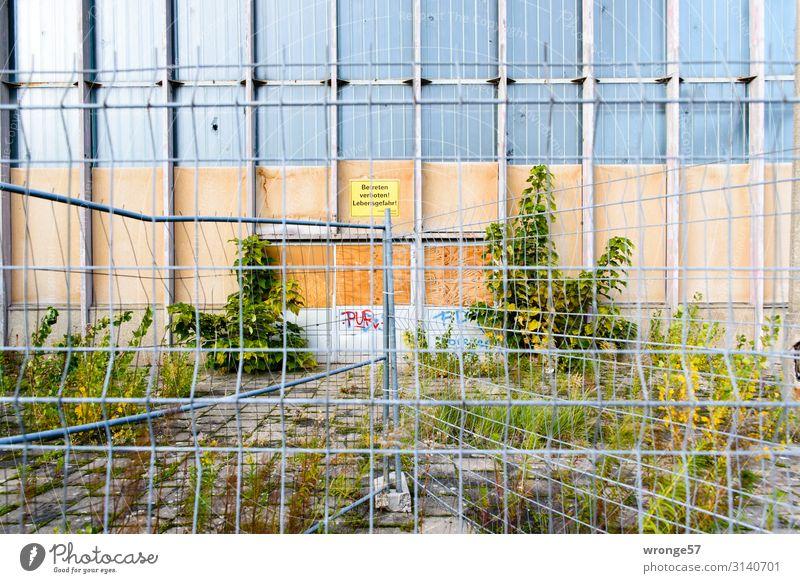 Hinter Gittern II Magdeburg Deutschland Europa Stadt Hauptstadt Menschenleer Ruine Bauwerk Architektur Fassade Fenster alt trist braun grau grün Verfall