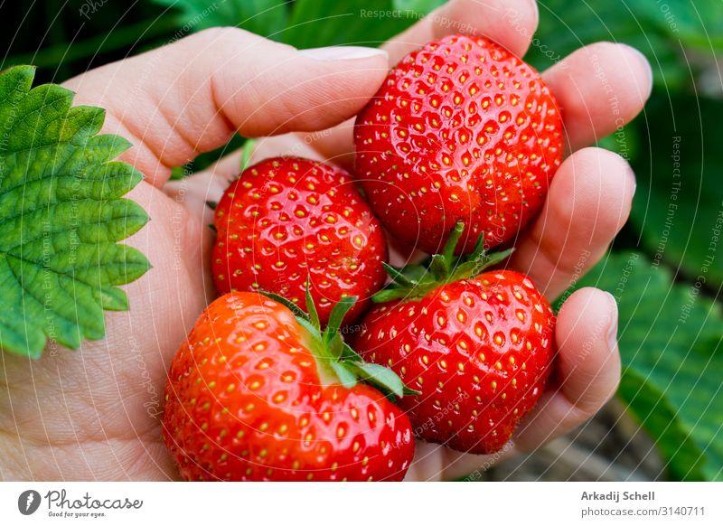 Pick juicy red strawberries Lebensmittel Frucht Ernährung Frühstück Mittagessen Abendessen Picknick Bioprodukte Vegetarische Ernährung Diät Fastfood Slowfood