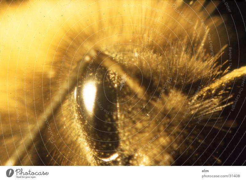 Auge Motte Makroaufnahme Nahaufnahme