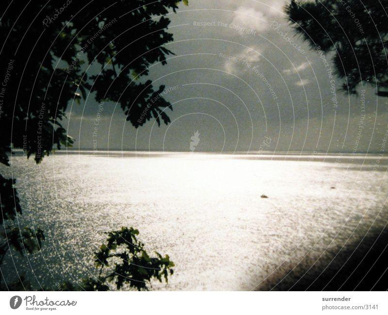 Illuminated water Meer Baum Licht Sonne Reflexion & Spiegelung