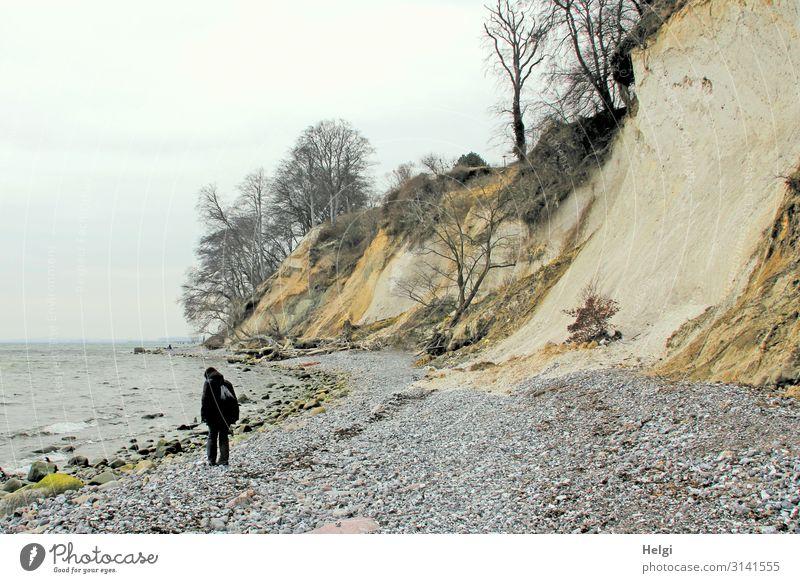 Frau sucht Steine an der Kreideküste von Rügen Mensch feminin Erwachsene 1 45-60 Jahre Umwelt Natur Landschaft Frühling Baum Küste Ostsee Insel Klippe
