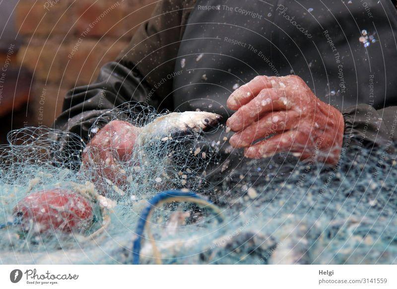 Hände eines Fischers entfernen Hering aus dem Fischernetz Lebensmittel Arbeit & Erwerbstätigkeit Fischereiwirtschaft Arbeitsplatz Hand 1 Mensch Kunststoff Netz