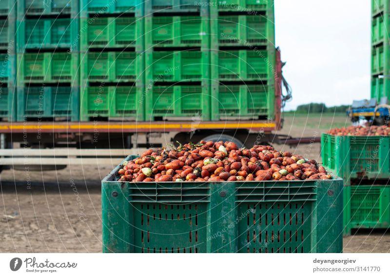 Tomaten zum Einmachen. Landwirtschaftliche Flächen und Kisten Gemüse Ernährung Vegetarische Ernährung Sommer Garten Gartenarbeit Natur Pflanze Verkehr Traktor