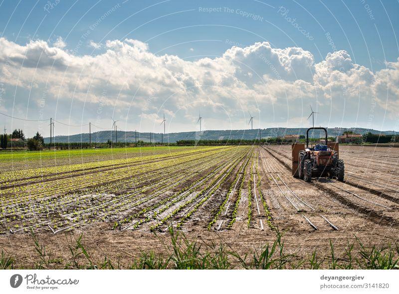 Traktor im Salatanbau. Gemüse Garten Industrie Maschine Natur Landschaft Pflanze Wachstum natürlich grün Ackerbau Feld Bauernhof ländlich landwirtschaftlich