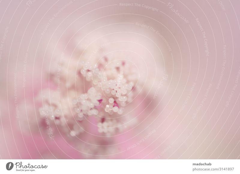 Rosa - Pink Makro Blume Blüte romantisch verliebt Natur Pflanze exotisch rosa Vertrauen Liebe Verliebtheit Romantik schön Ehrlichkeit träumen ästhetisch Duft