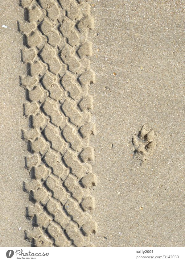 Druckerzeugnis | Sandspuren... Spuren Reifenabdruck Hundepfote Abdruck Sandstrand Profil Reifenprofil parallel Fußabdruck Eindruck Spurensuche Muster