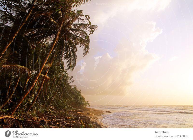 erwachen Ferien & Urlaub & Reisen Tourismus Ausflug Abenteuer Ferne Freiheit Umwelt Natur Landschaft Himmel Wolken Sonne Palme Urwald Wellen Strand Meer