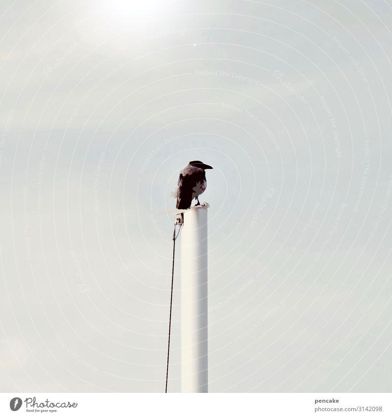 genie überblickt chaos Himmel Sonne Tier Vogel Wildtier Erfolg hoch beobachten Klima Urelemente Unendlichkeit Dunst Fahnenmast überblicken Darß Dohle