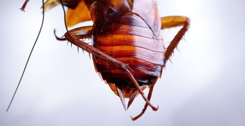 Natur weiß Haus Tier Tod braun Körper Erde dreckig Flügel Küche Sauberkeit Lebewesen Insekt gruselig heimwärts