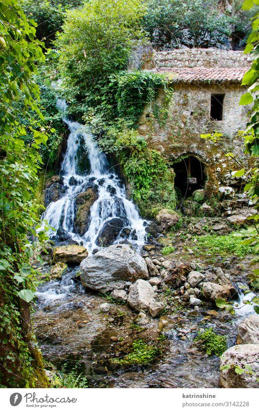 Alte Wassermühle im Naturschutzgebiet von Morigerati Landschaft Moos Wald Fluss Oase Ruine Umweltschutz morigerati Mühle Wasser wird Verlassen antik Campania