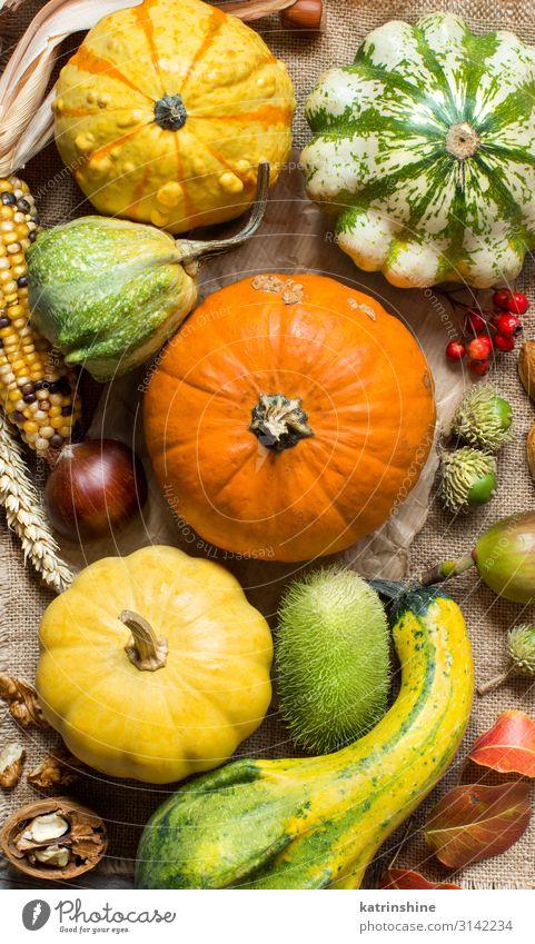 Herbstlicher Hintergrund mit Kürbissen Gemüse Vegetarische Ernährung Erntedankfest Halloween Menschengruppe Blatt dunkel frisch natürlich gelb grün Land fallen