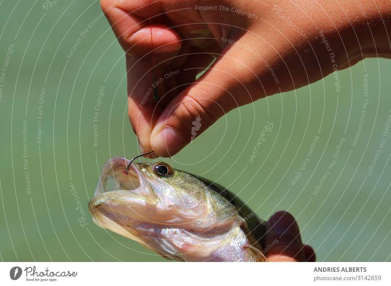Fischen ist Leben - Hakenbarsch Sinnesorgane Erholung Freizeit & Hobby Angeln Ferien & Urlaub & Reisen Tourismus Ausflug Abenteuer Freiheit Sightseeing Sommer