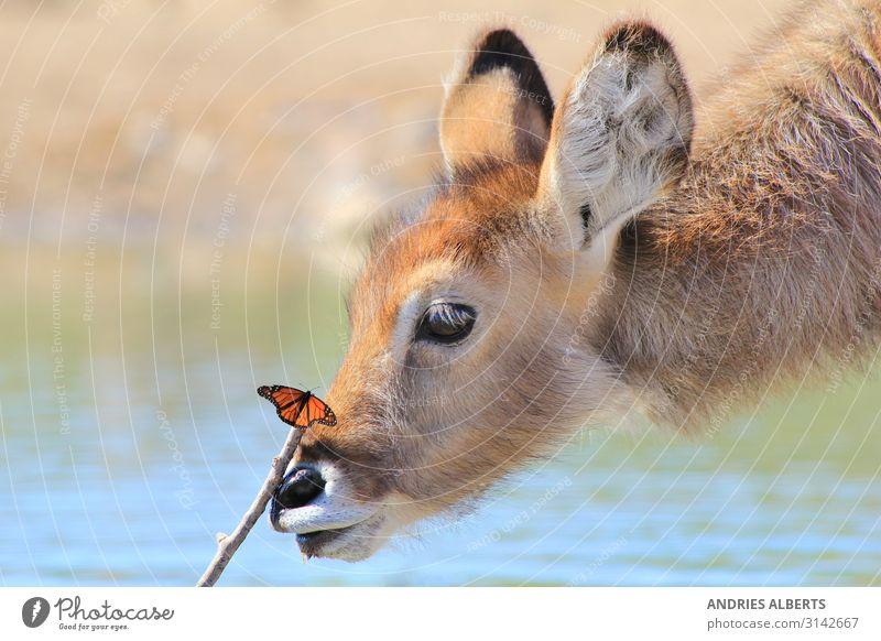 Ferien & Urlaub & Reisen Natur blau schön Tier ruhig Tierjunges Leben Umwelt Frühling Tourismus Freiheit orange braun Ausflug Park
